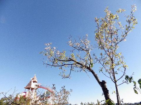 himaraya120701.jpg