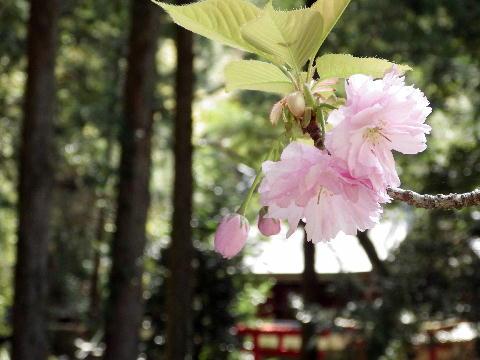 kawakami04051.jpg